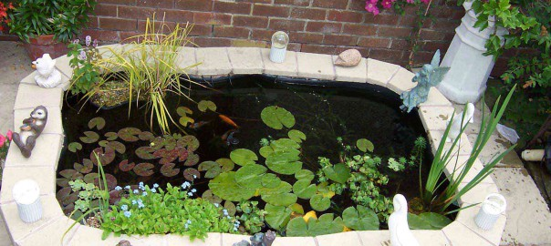 Ponds from Aquatic Care